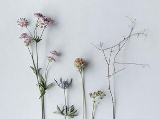 Einzelne Blumen nebeneinander auf dem Tisch liegend