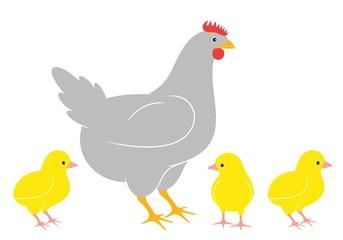 Chicken. Chick