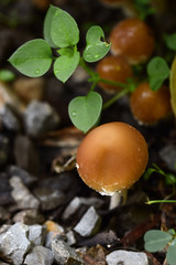 Close up picture of small mushroom