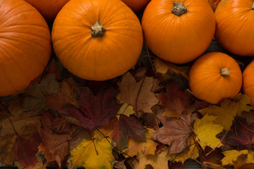 Overhead of Pumpkins on Dried Leaves with Copy Space
