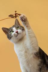 Katze fängt kleine Windmühle