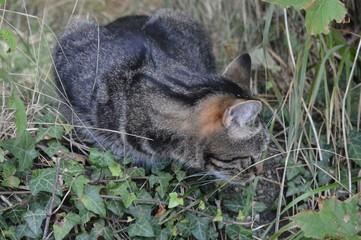 Katze beobachtet Mäuseloch