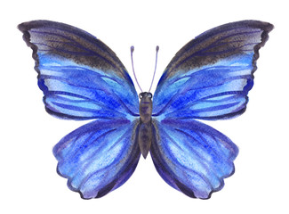 Blue butterfly, watercolor painting.