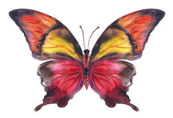 Maroon-yellow butterfly, watercolor painting.