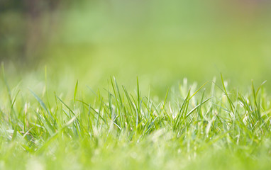 Defocused grass on field