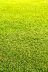 playground, Green lawn pattern, Green grass natural background.
