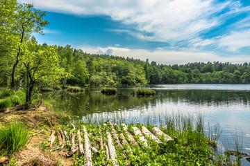 Fototapeta Sunny summer landscape of lake in the forest