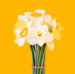 a bouquet of daffodils isolated on a light orange background