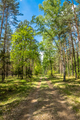 Beautiful forest road at spring landscape