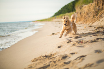 Dog running on sand beach