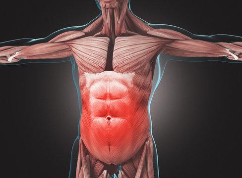 Corpo umano con addome o muscoli addominali arrossati