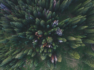 Treetops, overhead view