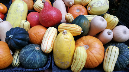 Variety of Squashes at a Farmer's Market