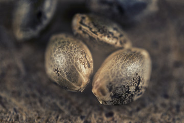 Marijuana seeds over grungy brown background - cannabis growing