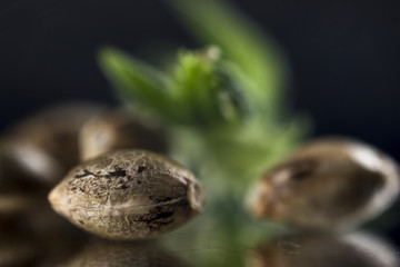 Marijuana seeds over dark reflective background - cannabis growi