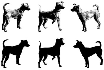 silhouettes and sketch illustration of mini pincher dog