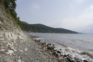 сосны растущие на склоне скал у моря