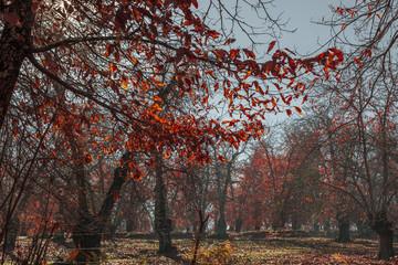 Sunlight coming through the trees in a field full of orange leav