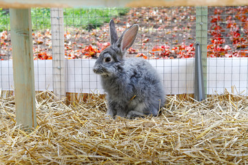 Grey domestic rabbit sitting in a cage