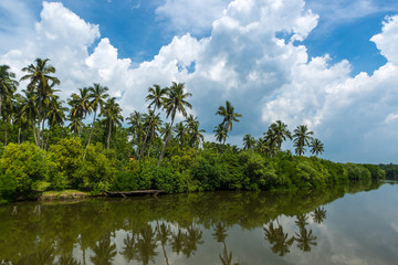 Foto auf Leinwand Fluss Tropical palm forest on the river bank. Tropical thickets mangro