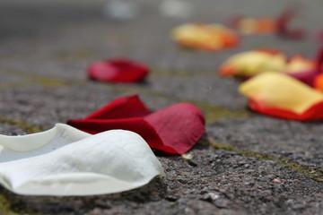 gestreute Blütenblätter bei einer Hochzeit