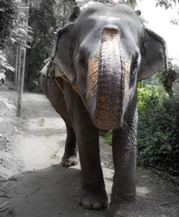 Elephant salute!