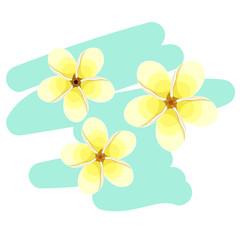 Hawaiian plumeria flower an exotic. vector illustration
