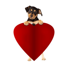 Fototapete - Puppy Holding Blank Valentines Paper Heart