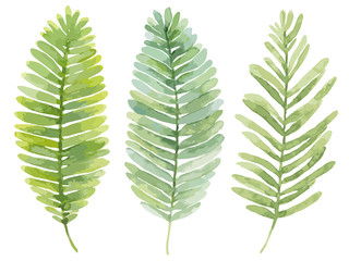 Vector set of watercolor leaves. Summer green leaves of a fern.