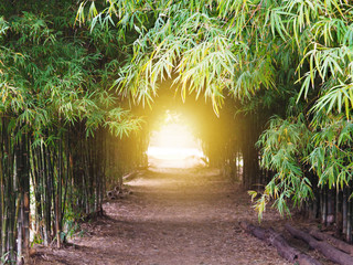 footpath through green bamboo forest