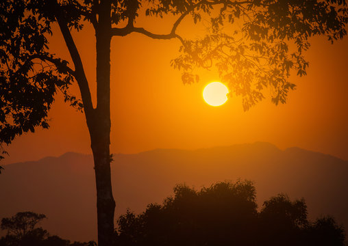 Sunset over mountains with silhouette tree.