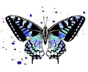 эскиз татуировки бабочка акварель