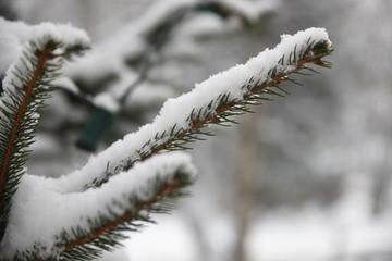 Foto Di Natale Neve Inverno 94.Foto Immagini Grafica Vettoriali E Video Esenti Da Royalty Per