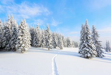 The path leads to the snowy forest.