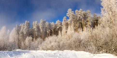 зимний пейзаж в лесу с деревьями в инее, Россия, Урал, февраль
