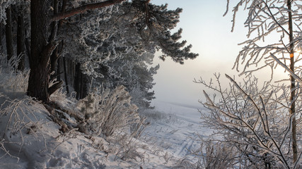 Mist in the winter forest.