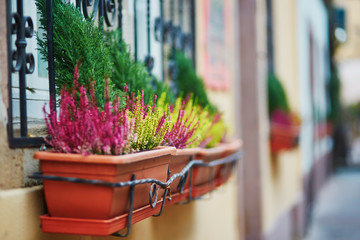 Building decorated with heather in flower pots