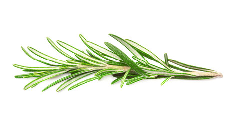 Sprig of fresh fragrant green rosemary isolated on white background