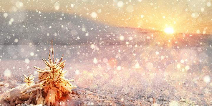 Winter Landscape Snowfall Sunset