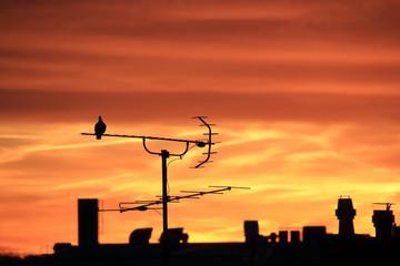 Alte Dachantenne im Morgenrot