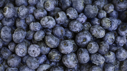 Blueberries from above