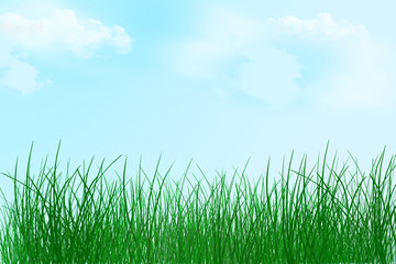 Nature spring background. Grass background. Summer. Clear day.