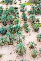 Date Plantation In The Desert