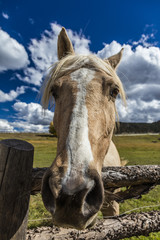 OCTOBER 1, 2016 - Close up horse snoot, near Ridgway, Colorado - just off Log Hill