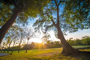 Green fresh park sunset with tree light beam