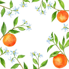 background with fruit tree branches, flowers, leaves and oranges