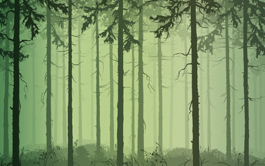 Wall Mural - background seamless horizontal pine wood, green tones, vector illustration. It can be used as wallpaper in the interior