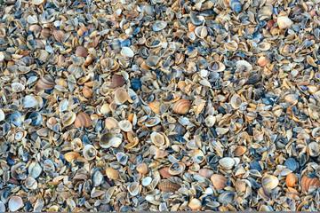 Seashells background texture