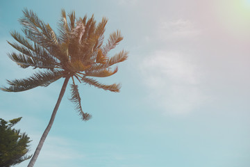 coconut palm tree and sky on beach. Vintage palm on beach in sum
