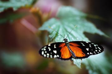 hübscher bunter Schmetterling - Falter